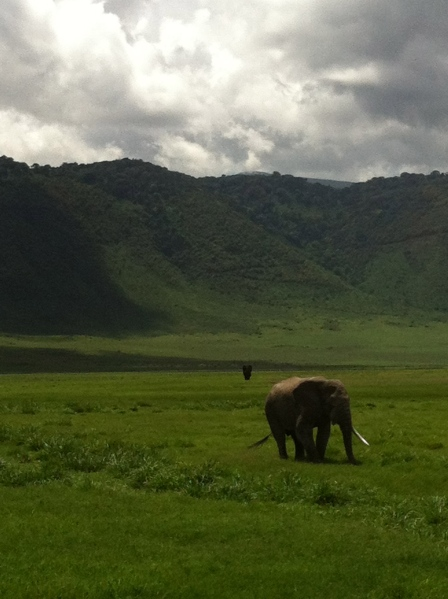 Set against the Ngorongoro Crater and Conservation Area in Tanzania, this elephant was short one tusk, but walked straight up to our safari car